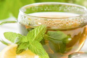 Te de boldo: Beneficios que el té de boldo a nuestro organismo