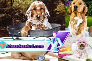 8 Remedios caseros contra las pulgas