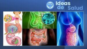 ¿Cuáles son las causas de la infección intestinal?