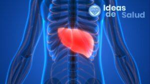¿Cuáles son los síntomas de la grasa en el hígado?