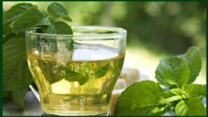 el te verde aclara el pelo