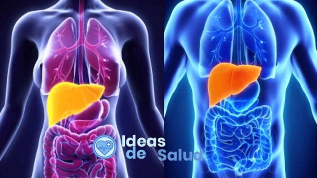 Tengo grasa en el hígado, ¿Qué hacer y cómo tratarla?